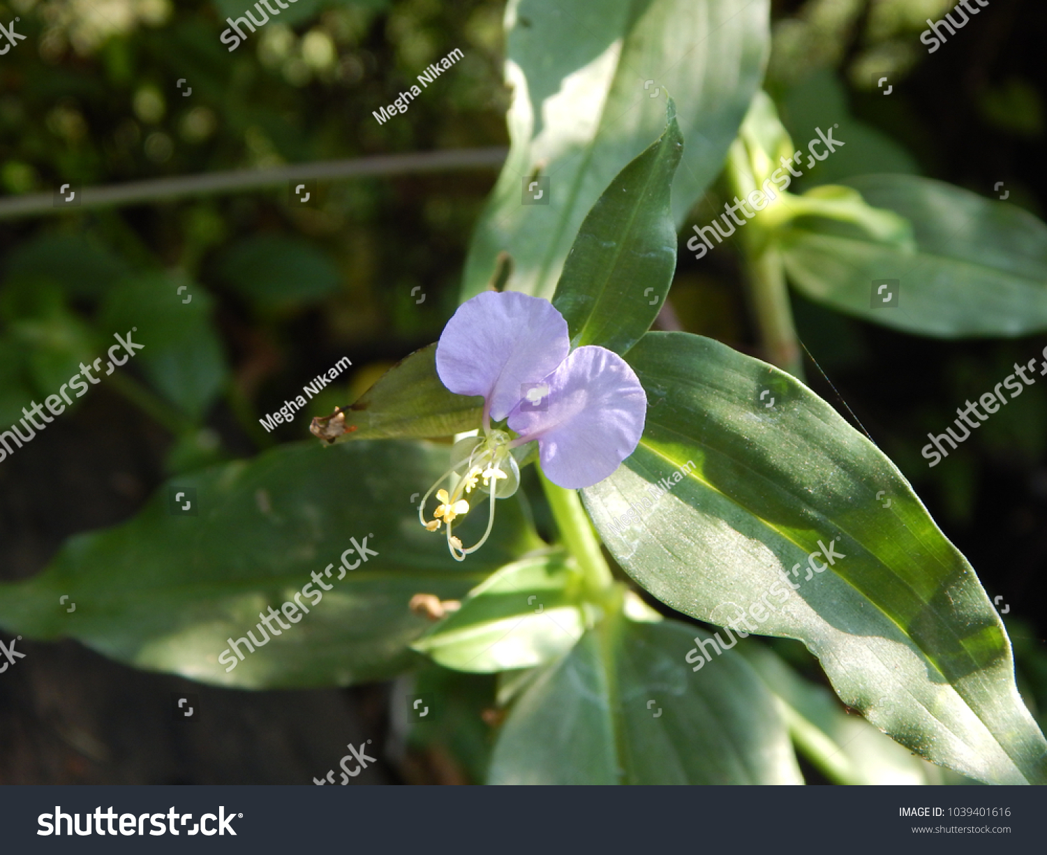 Beautiful wild flowers in coastal region of india ez canvas id 1039401616 izmirmasajfo