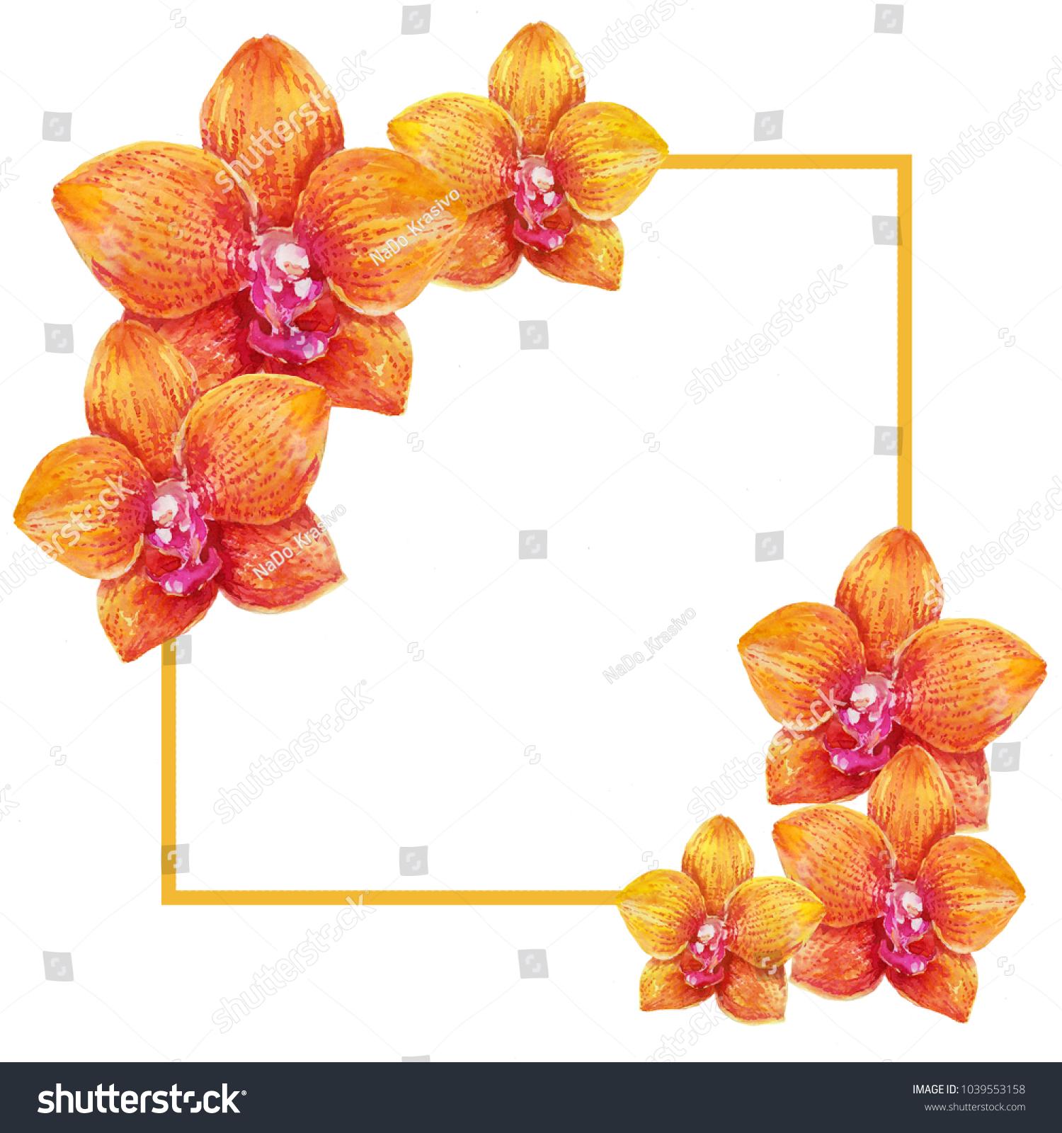 Orange Orchid Flowers Frame Watercolor Background Stock Illustration ...