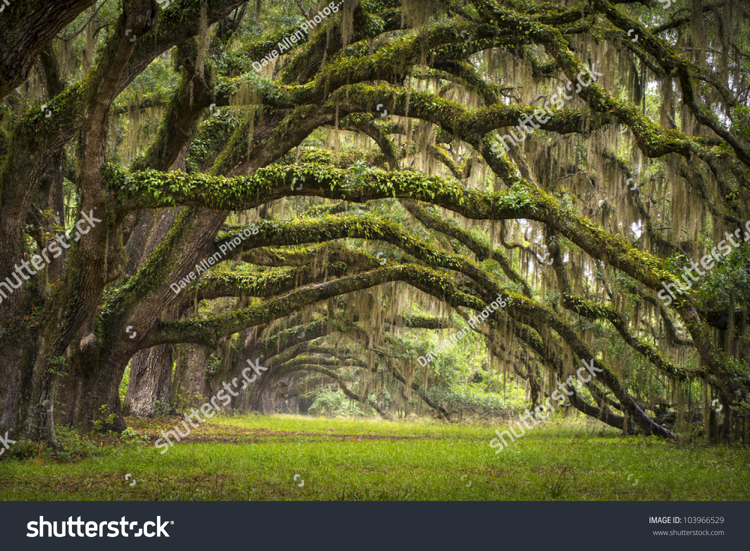 Oaks avenue charleston sc plantation live stock photo for Landscaping plants south carolina