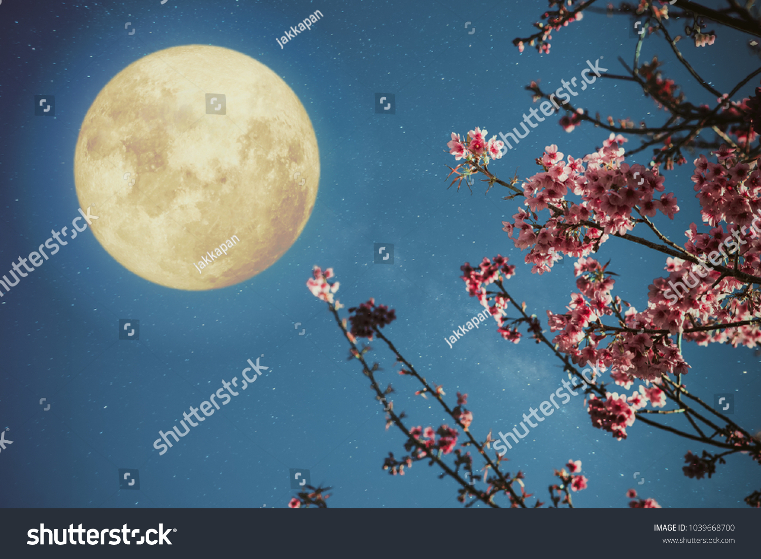 Romantic night scene beautiful cherry blossom stock photo safe to romantic night scene beautiful cherry blossom sakura flowers in night skies with full izmirmasajfo