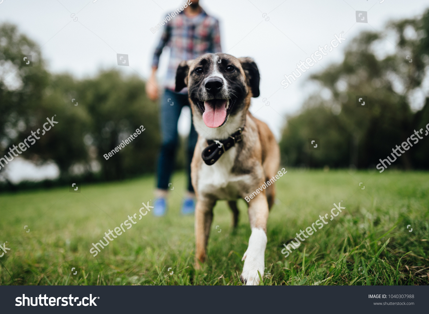 Adult stylish man playing with pet. Family outdoor. Animal lover. Happy dog enjoying freedom. Terrier breeding puppy have fun with owner. Furry crazy canine training at nature. Friends together. #1040307988