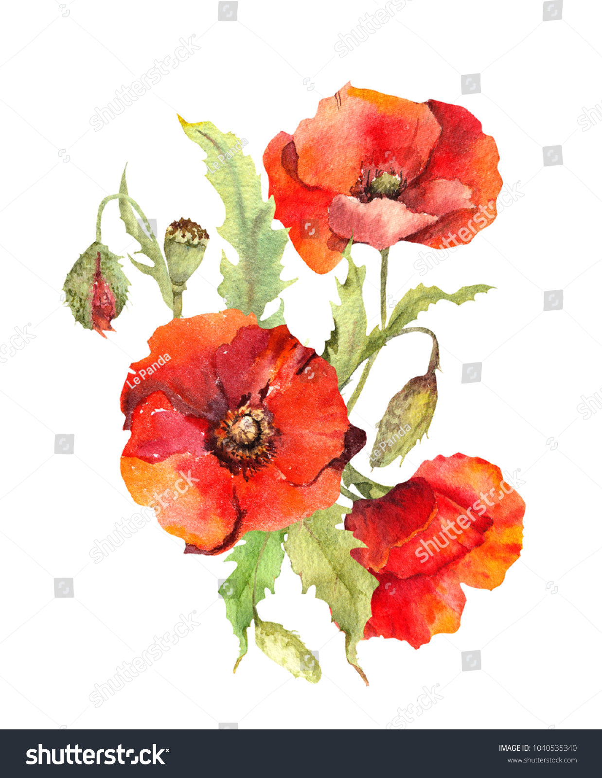 Red Poppy Flowers Bouquet Watercolor Stock Illustration 1040535340