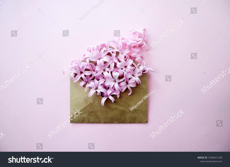 Hyacinth Pink Surprise Dutch Hyacinth Spring Stock Photo Edit Now