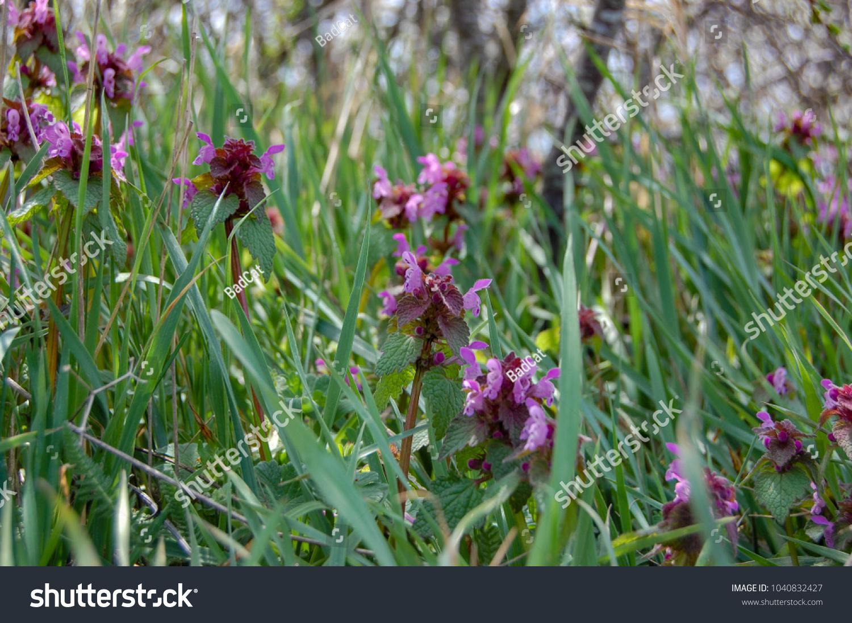 Purple Flowers In Grass Ez Canvas