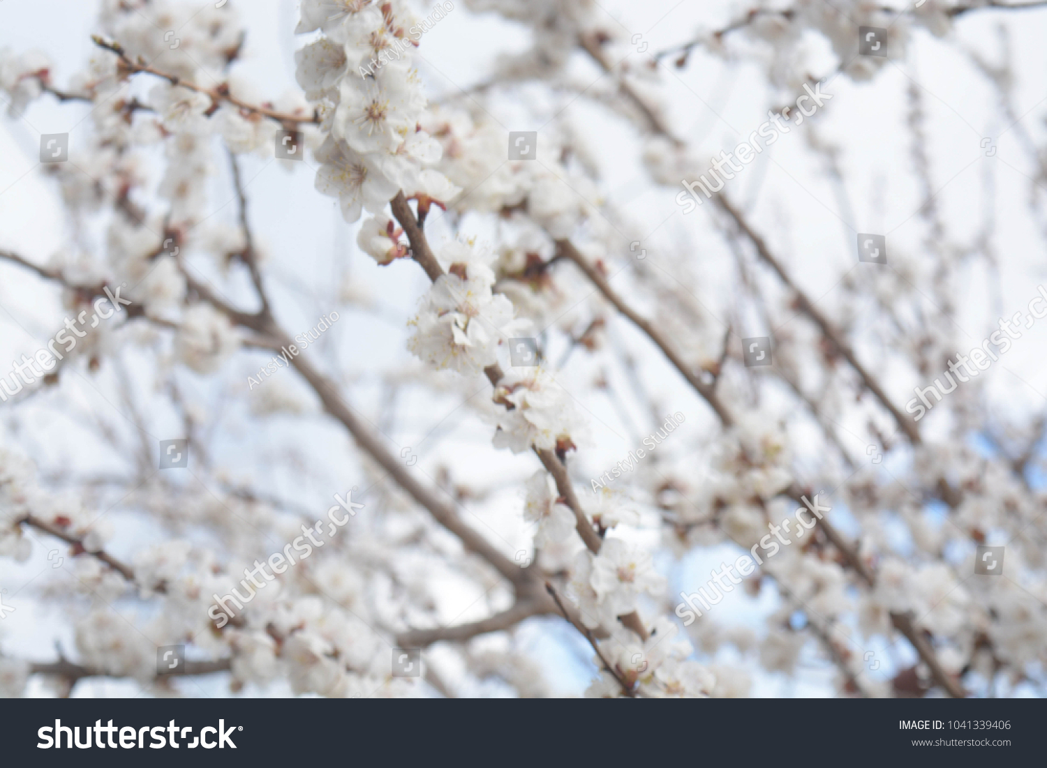 Natural Background White Tree Flowers Ez Canvas