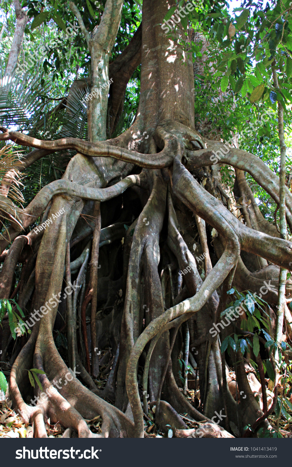 Huge Old Tree Tangled Roots Jungle Stock Photo Edit Now 1041413419