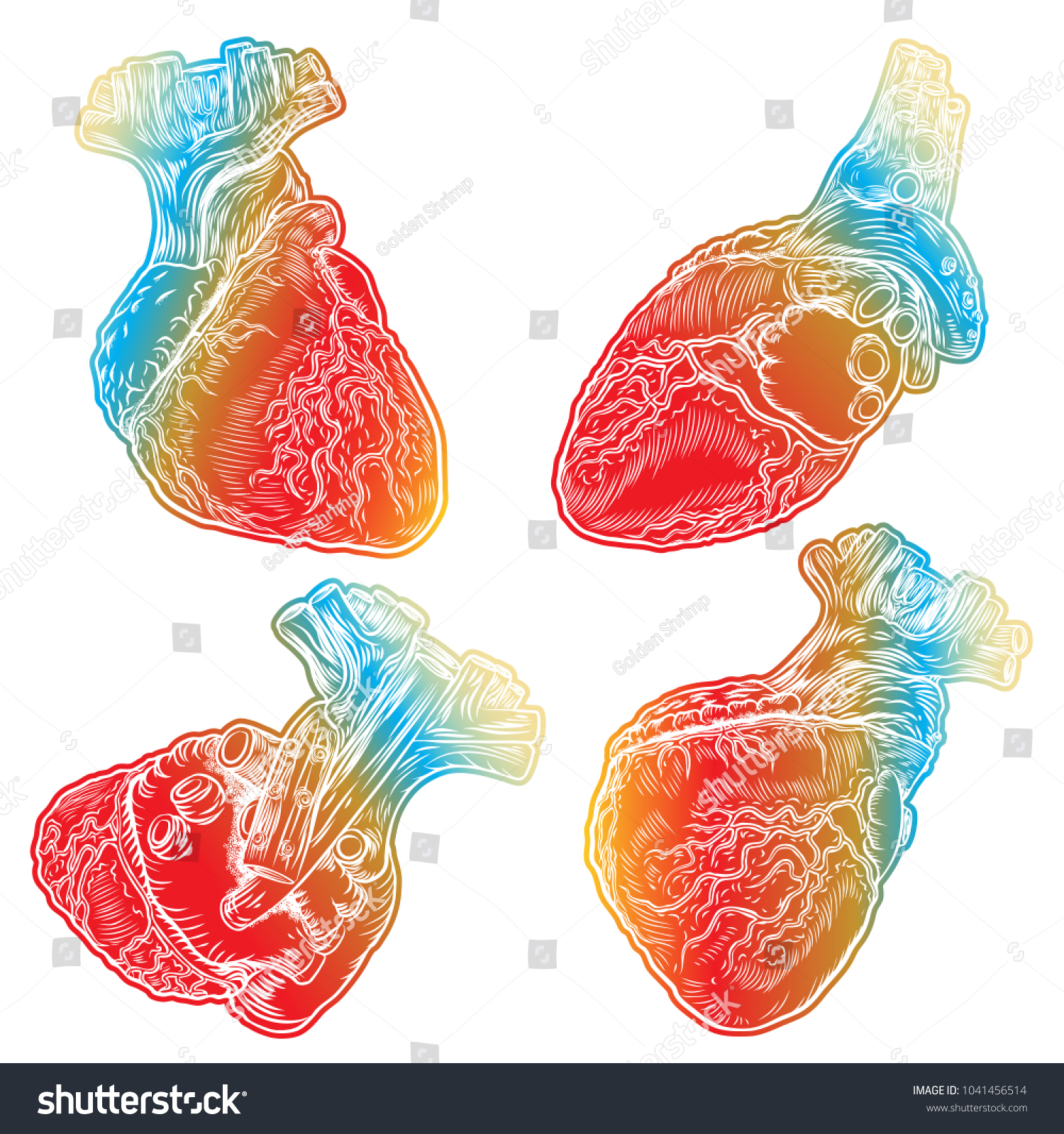 Set Red Human Hearts Aorta Veins Stock Illustration 1041456514 ...