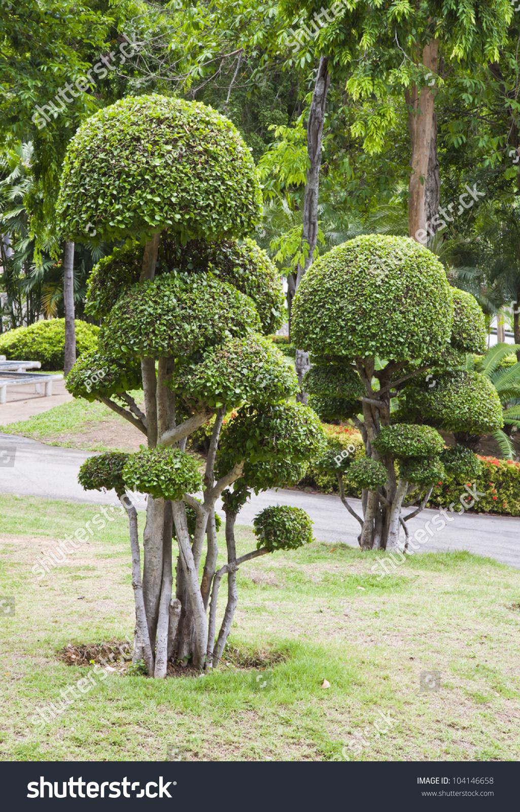 Beautiful dwarf tree garden in pattaya stock photo for Garden city trees