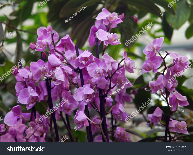 Violet Purple Tropical Exotic Flower Bush Orchid Ez Canvas
