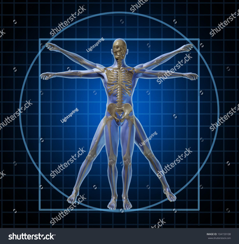 Stock Photo Vitruvian Human Skeleton Man And Body With As A Frontal Leonardo Da Vinci Like Anatomy Pose For