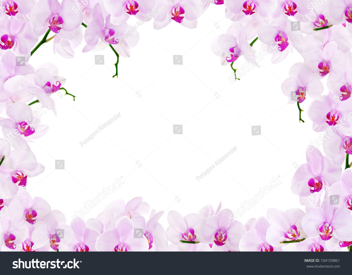 Pink Orchid Background