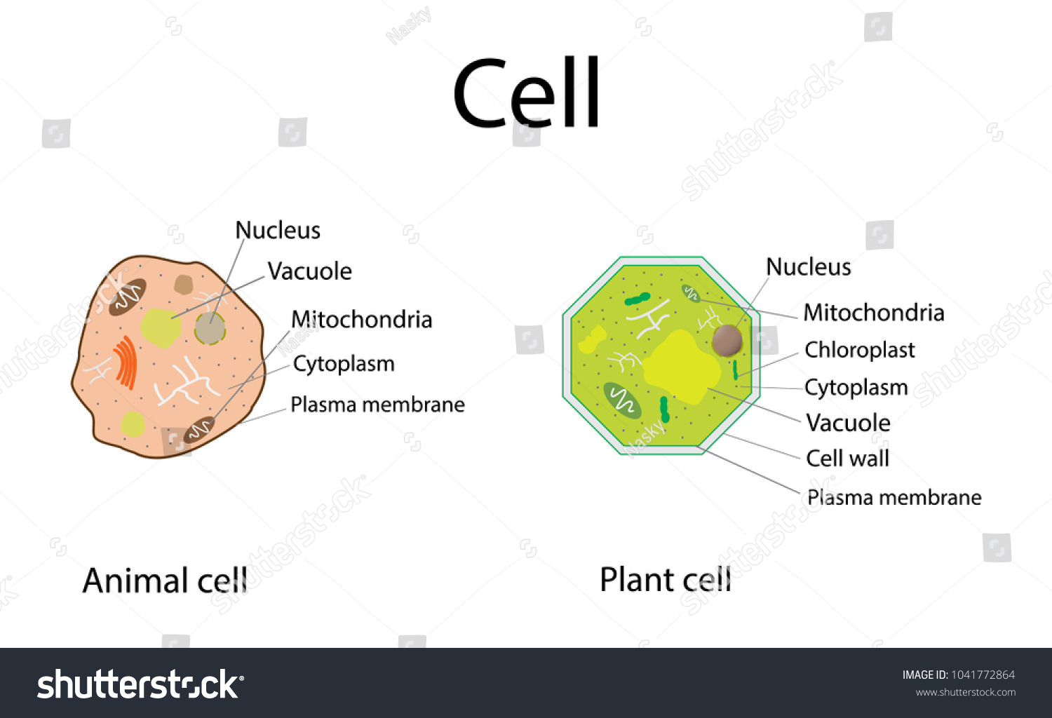 Animal cell plant cell structure cross stock vector 1041772864 animal cell and plant cell structure cross section detailed colorful anatomy cell biology ccuart Image collections