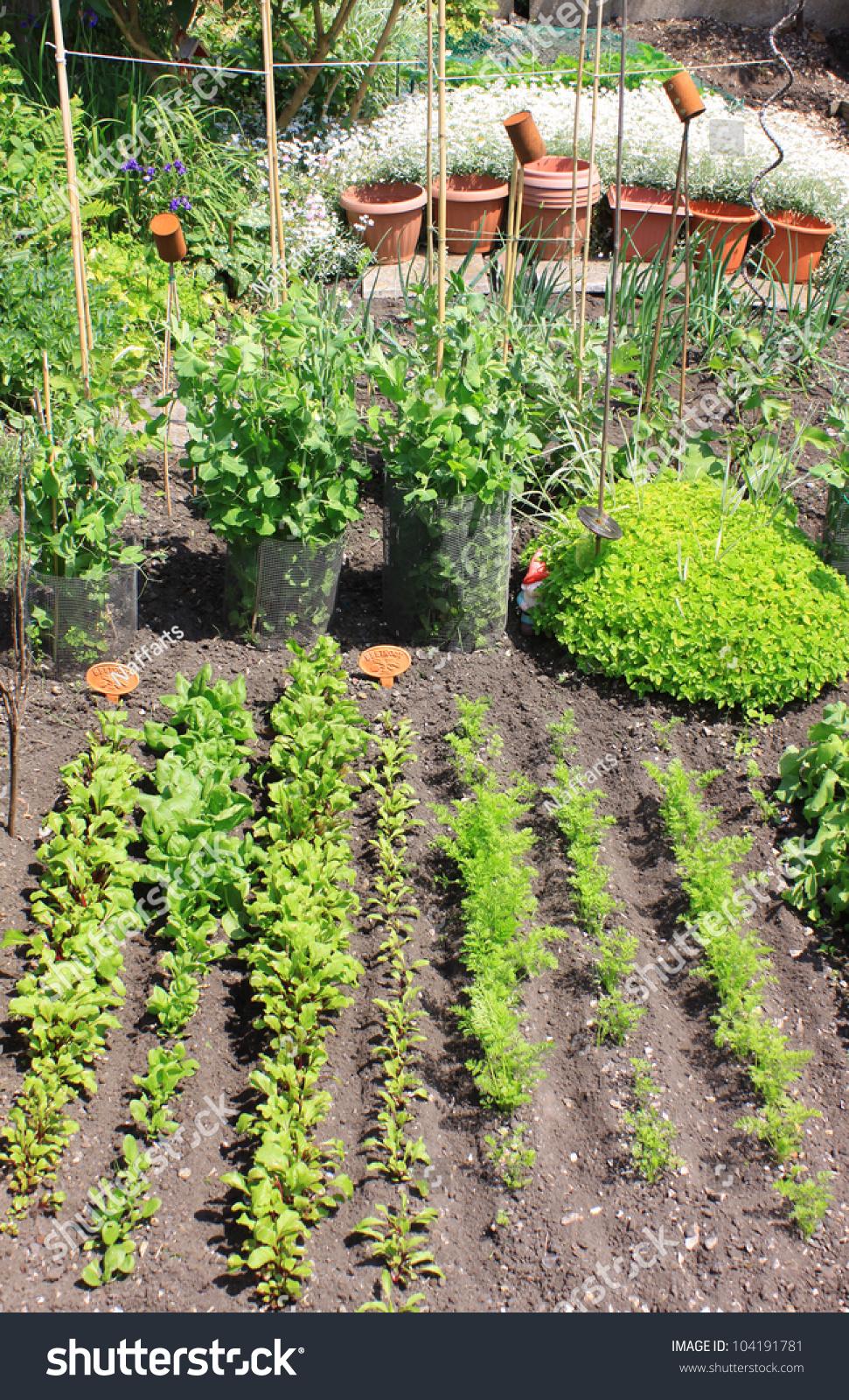 Small City Vegetable Gardenplot Variety Organically Stock