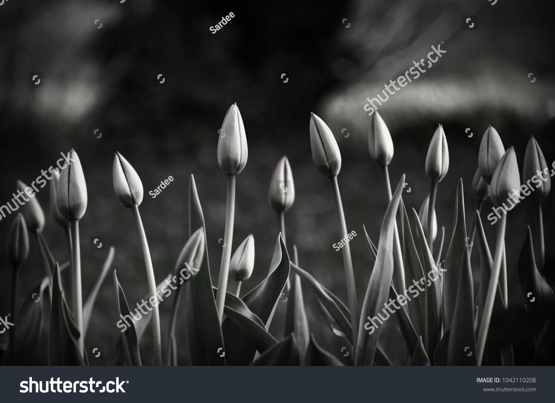 stock-photo-black-and-white-photo-of-clo