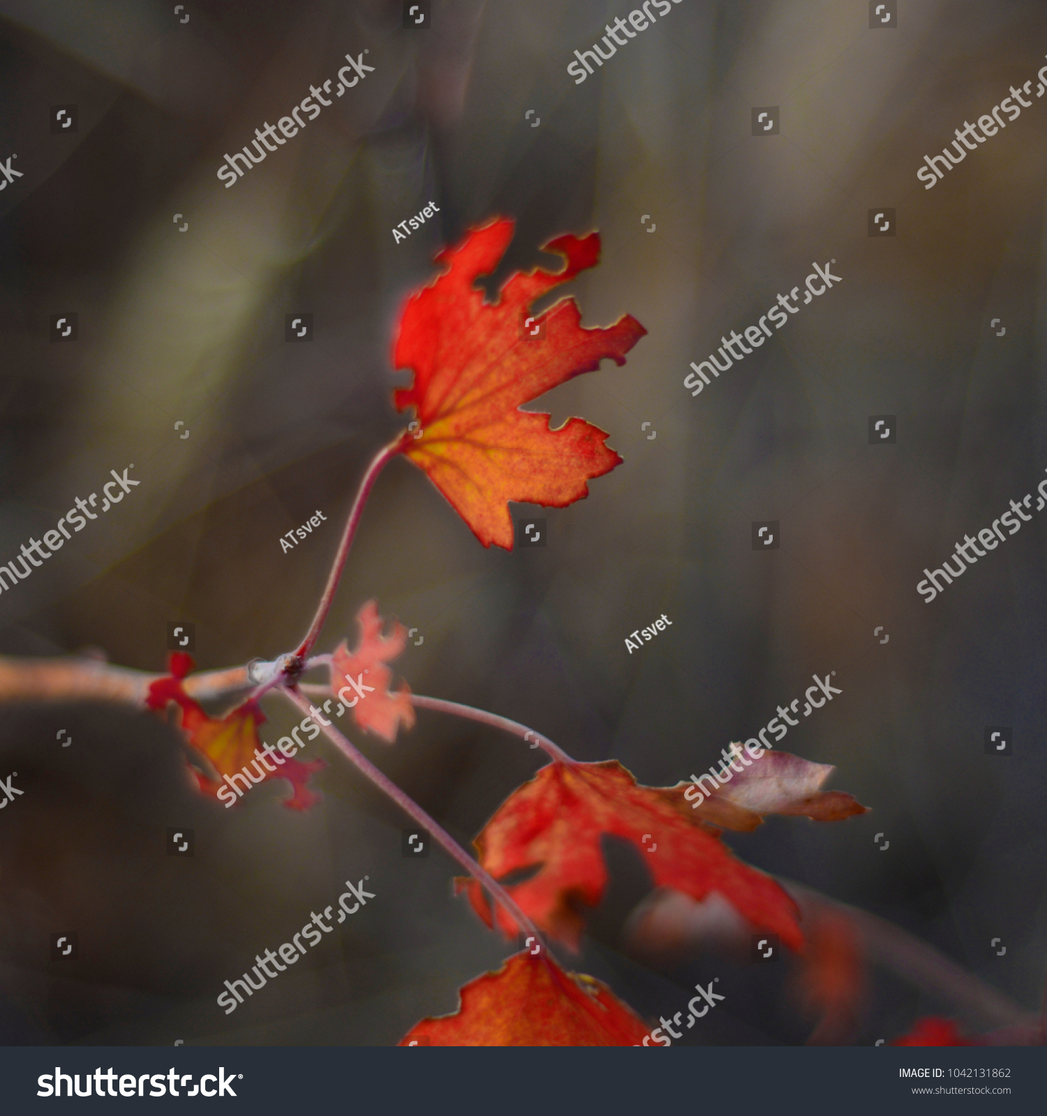 Autumn Leaves Fruits Red Yellow Orange Stock Photo Edit Now