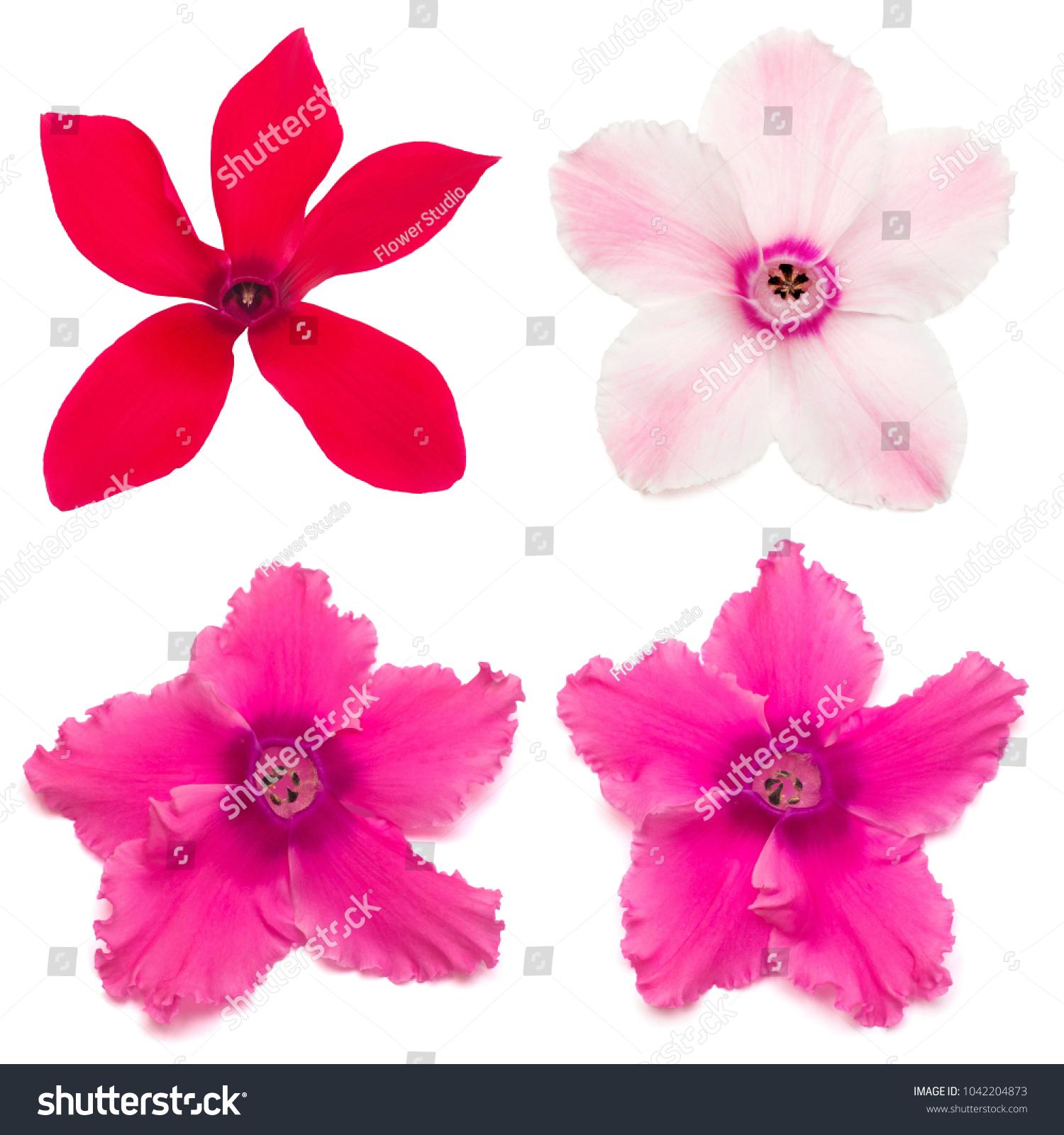 Hibiscus flower isolated flower die cut with path ez canvas izmirmasajfo
