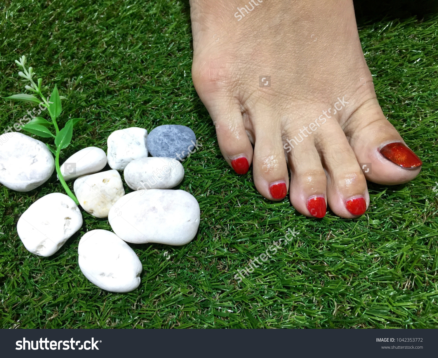 Bare Foot Grass Woman Feet Nails Red Stock Photo (Royalty Free ...