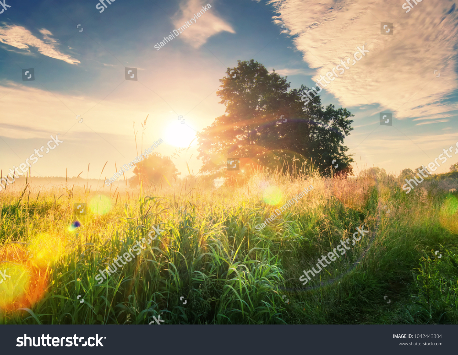 vivid summer sunrise on green meadow stock photo (safe to use
