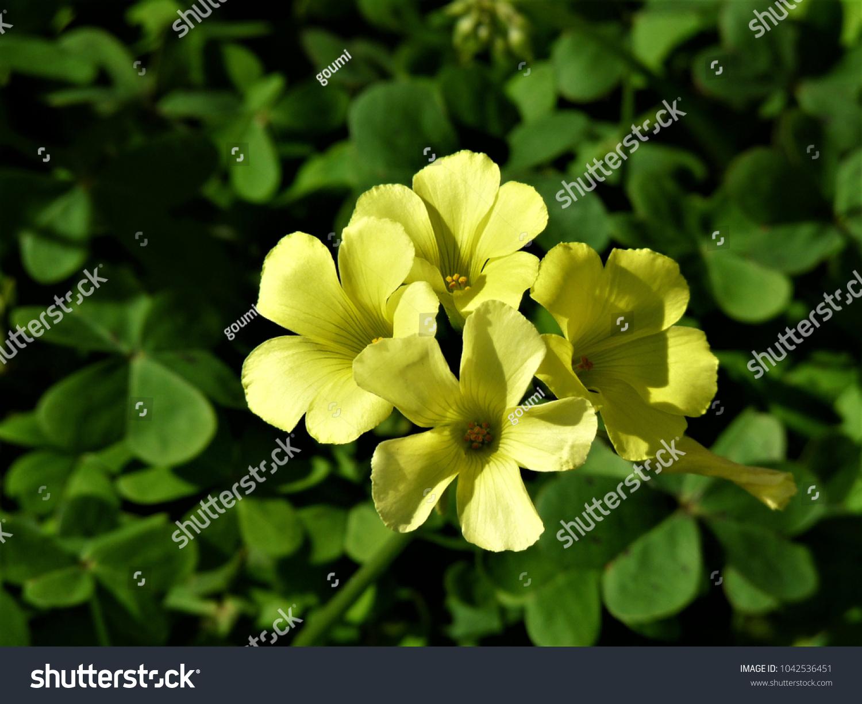 Yellow Flower In Home Garden Ez Canvas