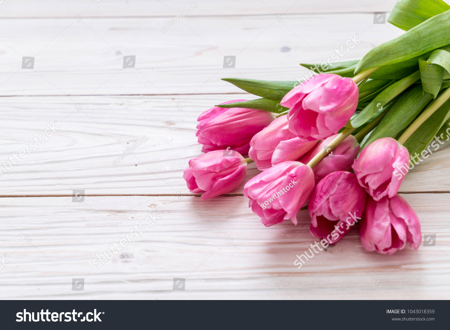 Pink Tulip Flower On Wood Background With Copy Space Ez Canvas