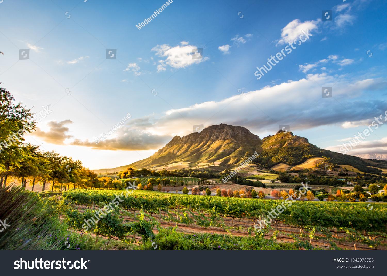 Wine region near Stellenbosch looking at Simonsberg in South Africa #1043078755