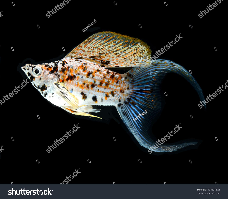 Ramona Osche | fish – white background