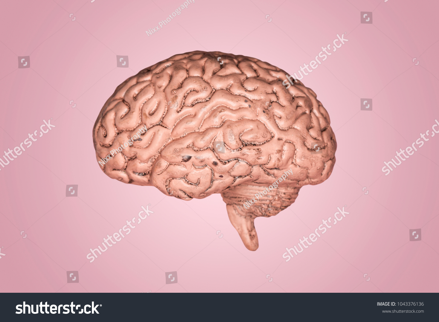 A Human Brain Part Of Anatomy Human Body Model With Organ System