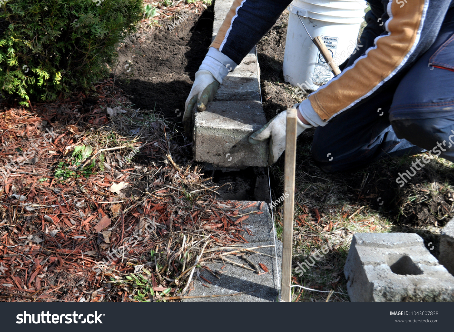 Man Trimming Cutting Dead Branches Tree Stock Photo (Edit Now