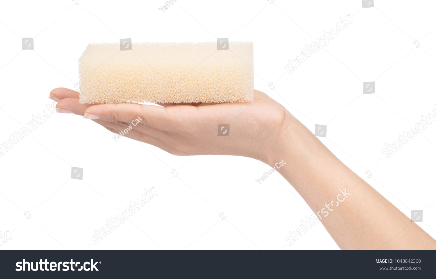 Hand Holding Sponge Cleaning Kitchen Isolated Stock Photo (Safe to ...