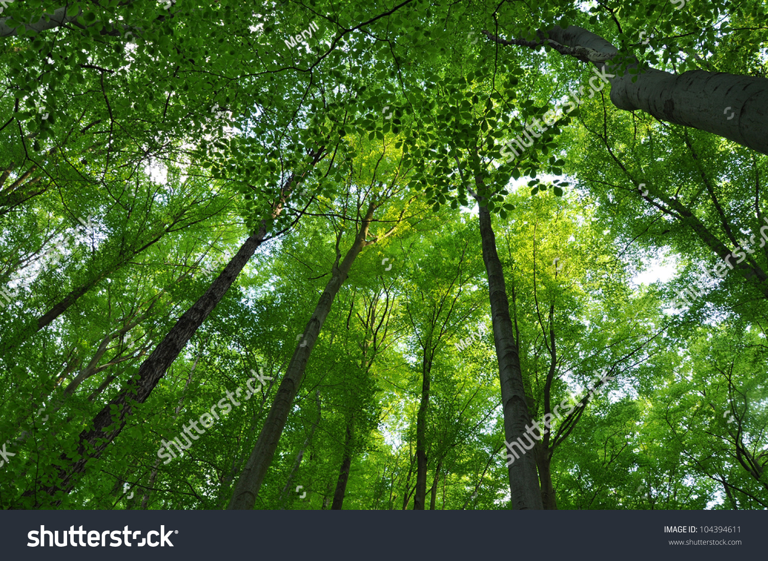 green tree forest - photo #49
