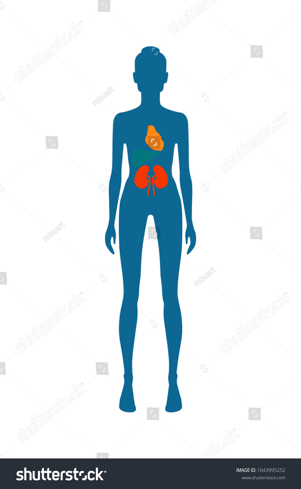 Female Body Kidney Heart Different Colors Stock Vector 1043995252 ...
