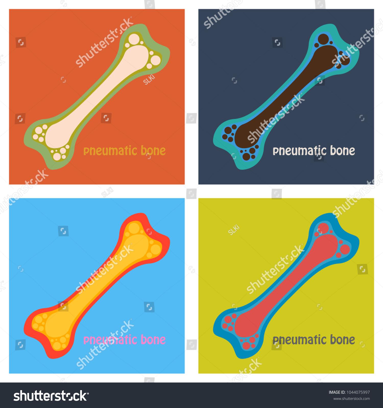 Set Flat Anatomy Long Bone Periosteum Stock Vector Royalty Free