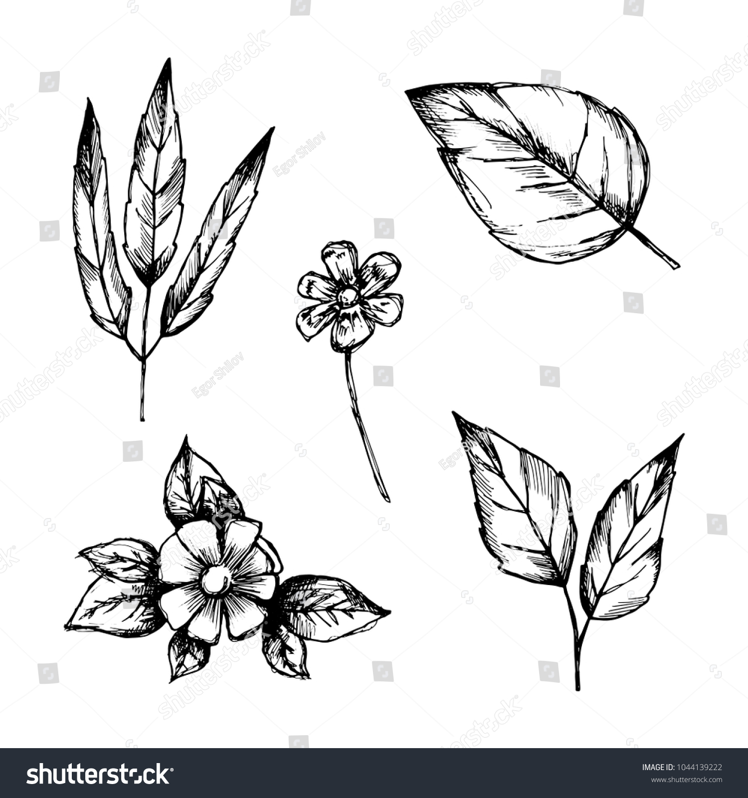 set of hand drawings isolated botanical vintage plants and flowers sketches