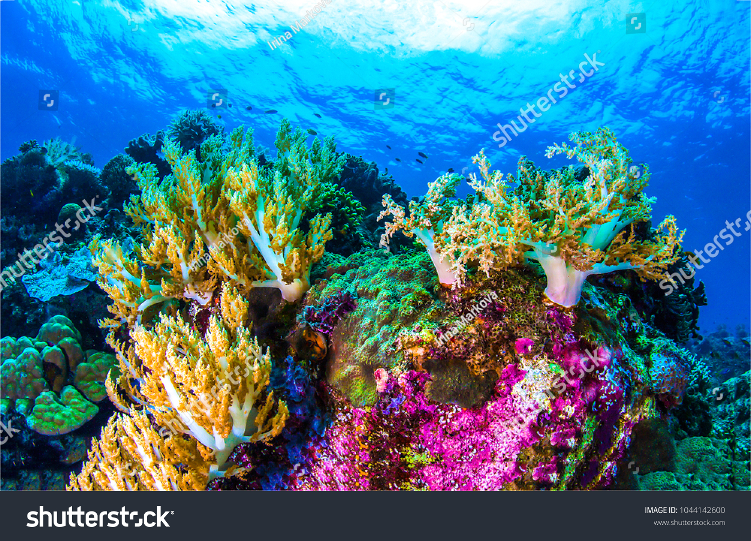 Underwater coral reef sea view landscape #1044142600