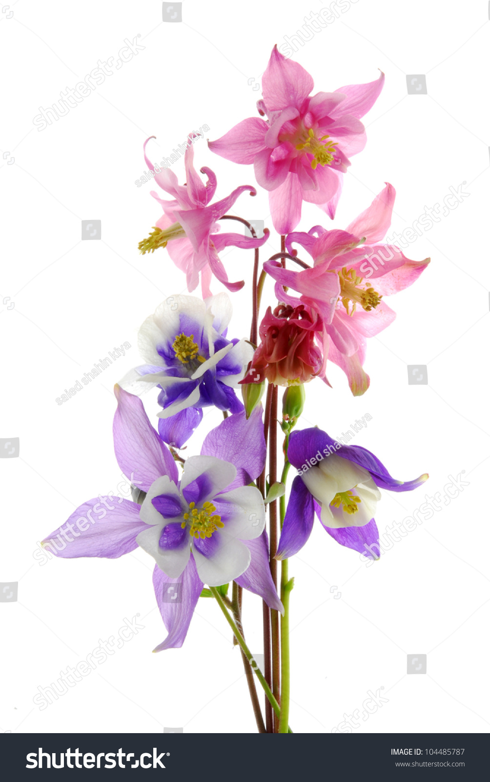 Columbine Flowers Ez Canvas