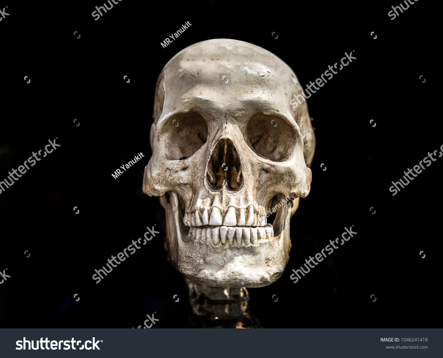 Human Scull On Black Isolate Show Stock Photo Edit Now 1046241418