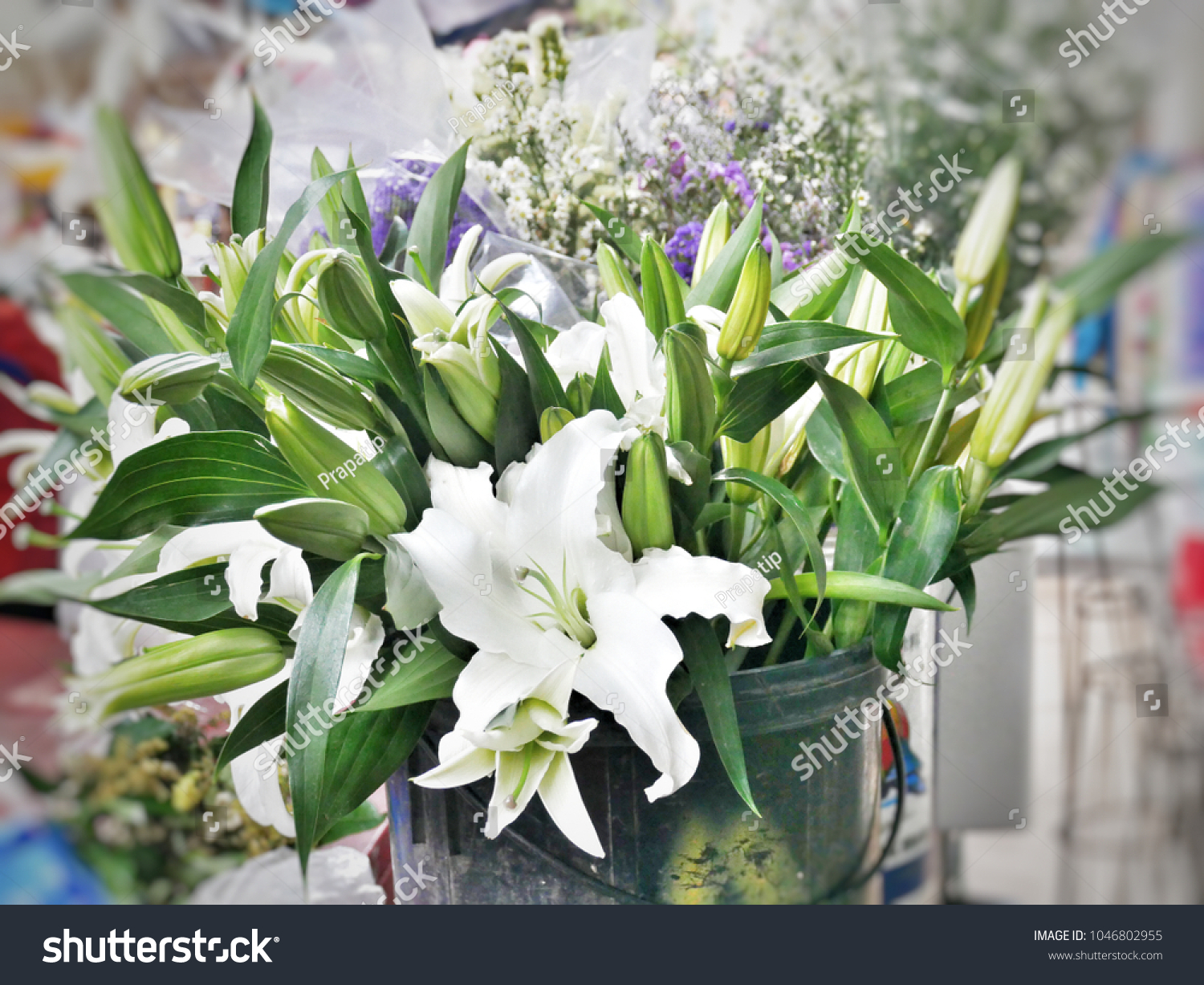 White lily flower symbolizes virginity chastity stock photo edit white lily flower symbolizes virginity chastity and virtue izmirmasajfo