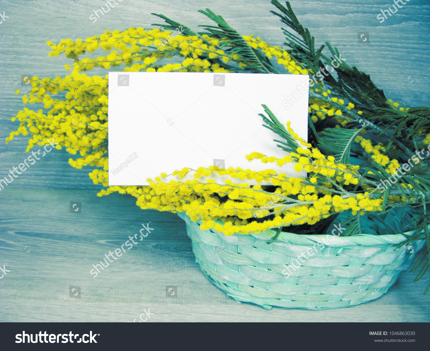 Mimosa yellow flowers bush floral spring stock photo royalty free mimosa yellow flowers bush floral spring stock photo royalty free 1046863030 shutterstock mightylinksfo