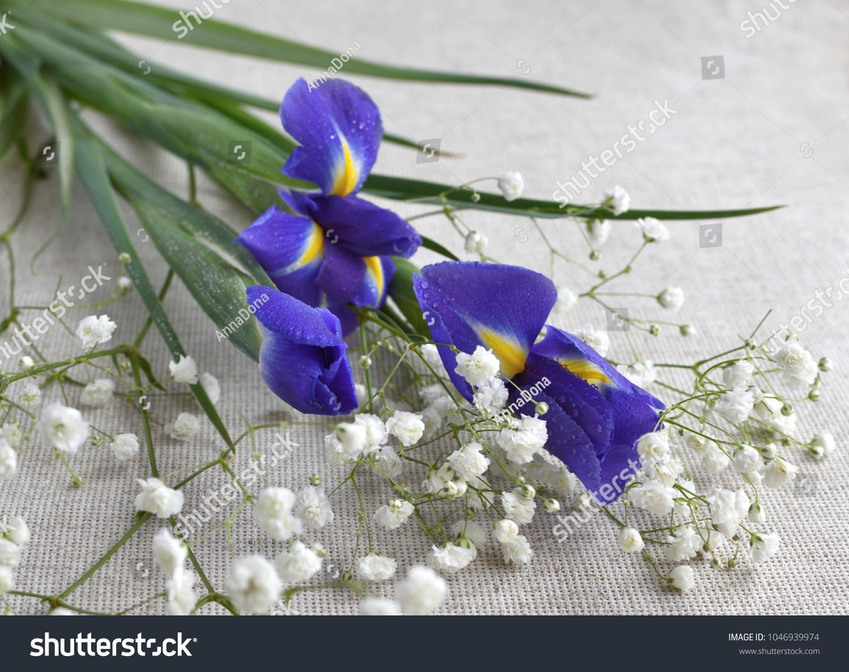 Closeup Bouquet Blue Iris Flowers Drops Stock Photo Edit Now
