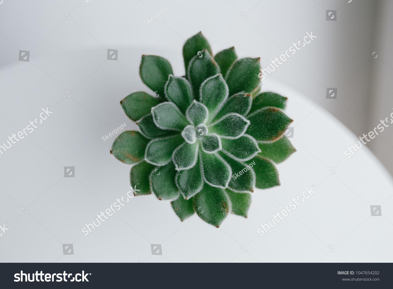 Home Indoor Plants Aloe Cactus Succulent Stock Photo Edit Now