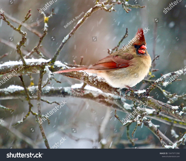Beautiful Michigan Birds Winter Settingssparrows Cardinals Stock
