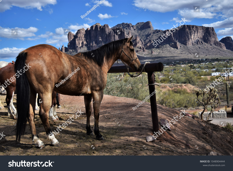 Horse Tied Hitching Post Desert Scenery Stock Photo (Edit