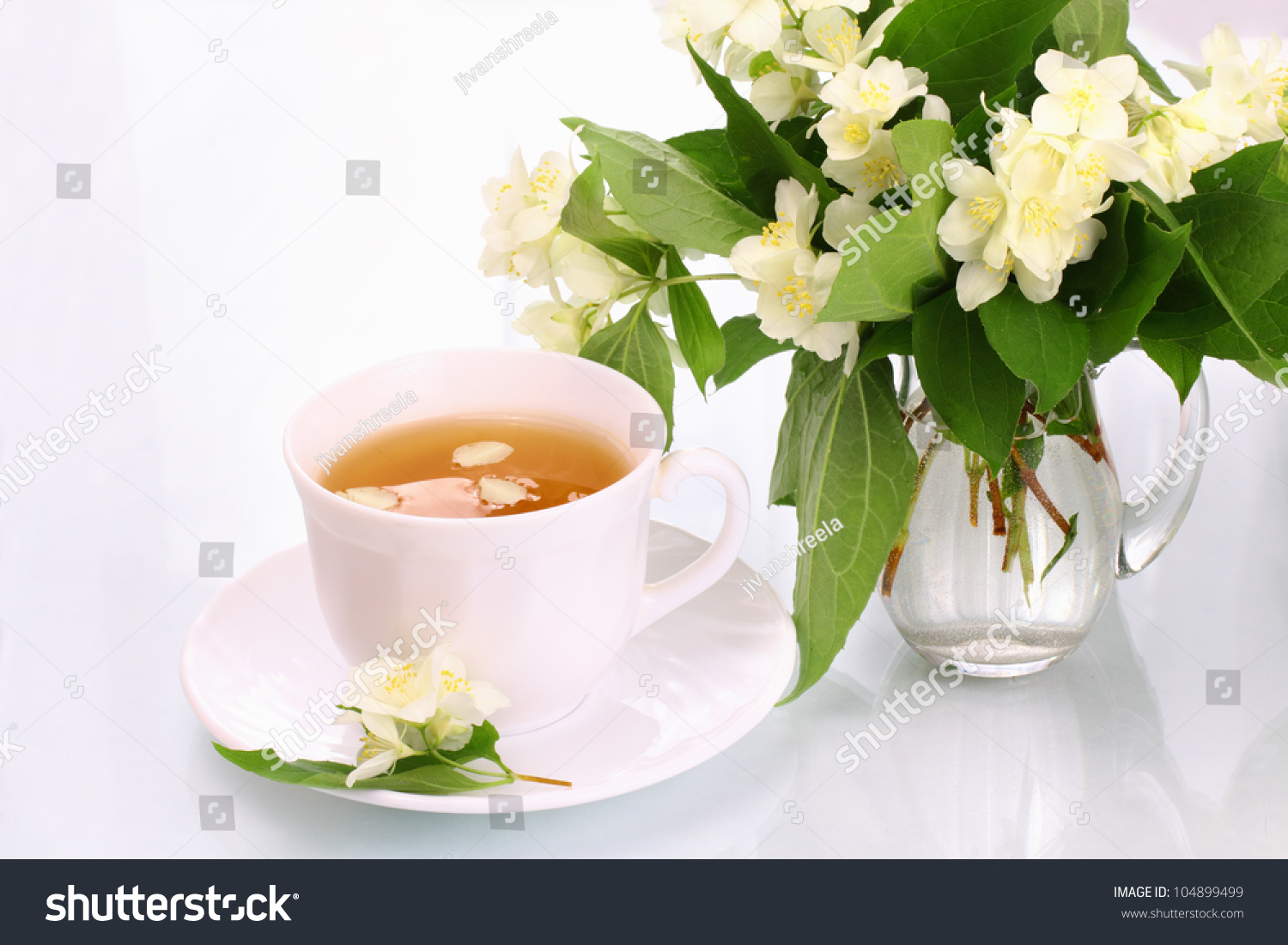 Jasmine Tea Flowers Stock Photo Royalty Free 104899499 Shutterstock