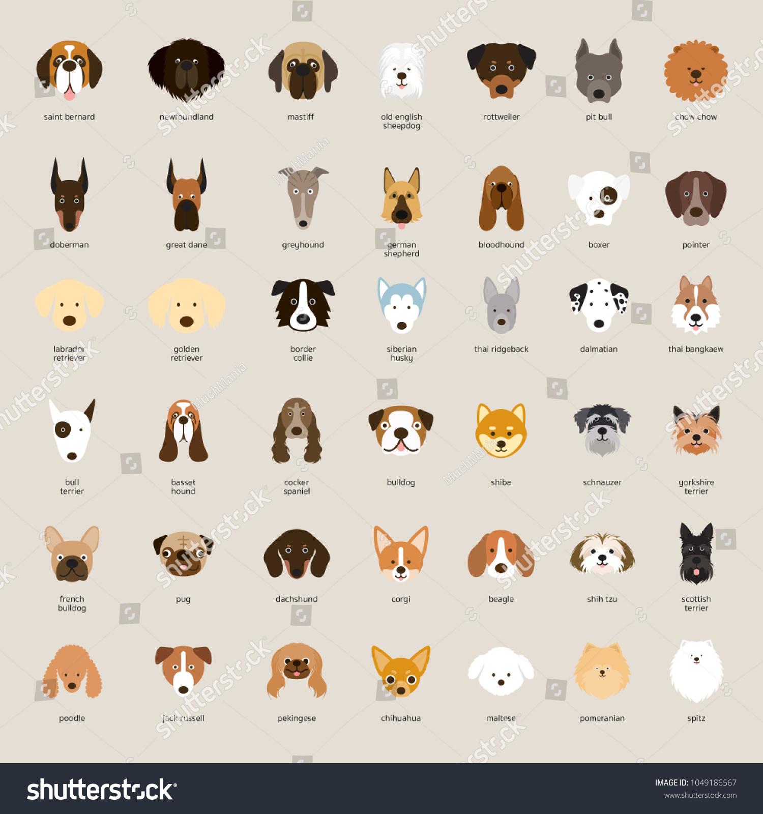 Dog Breeds, Head Set, Front View, Vector Illustration