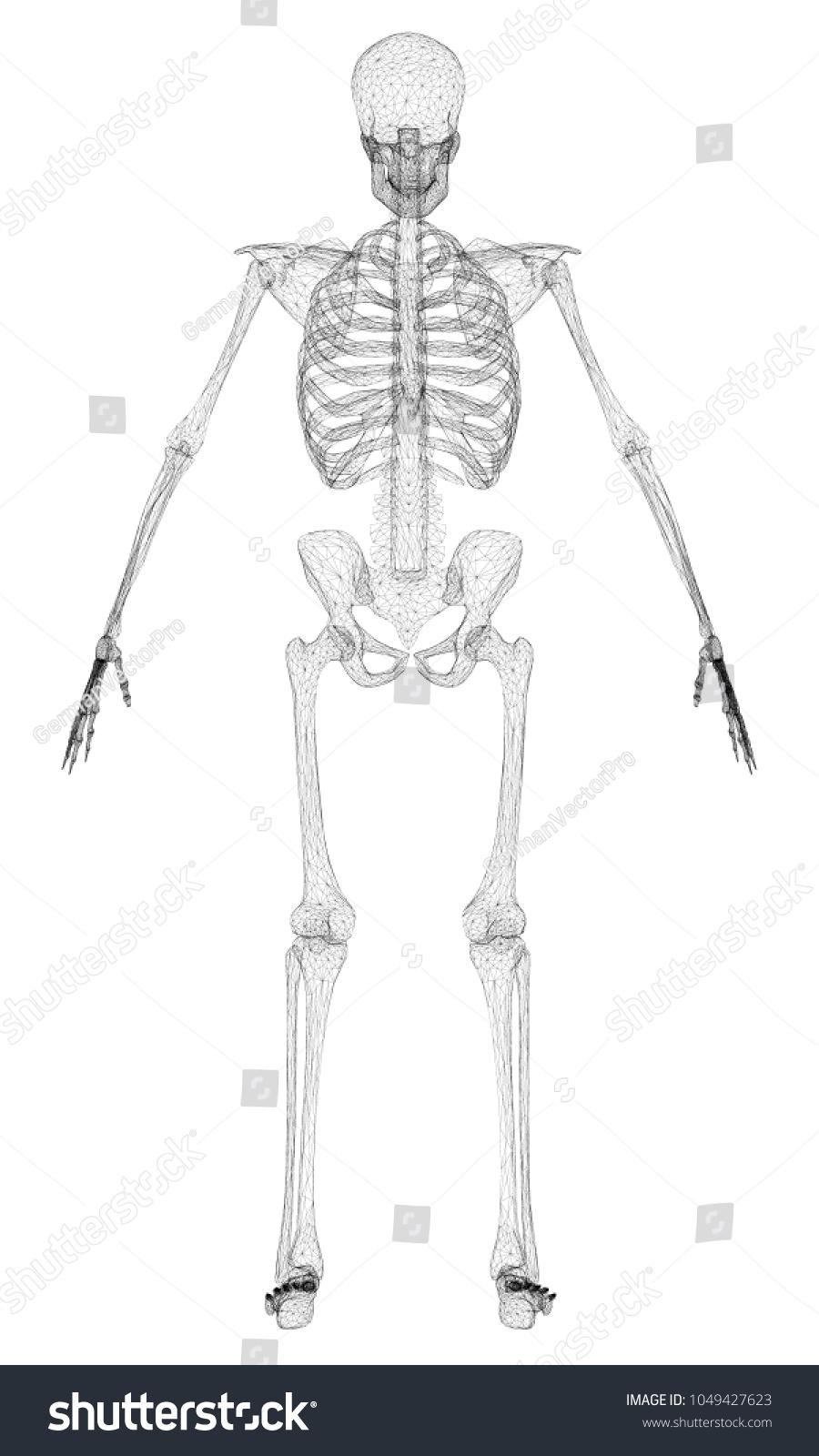 Polygonal Skeleton Person 3 D Outline Human Stock Illustration