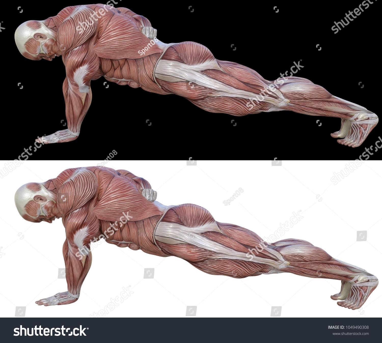 3 D Rendering Anatomical Body Shape Exercising Stock Illustration ...