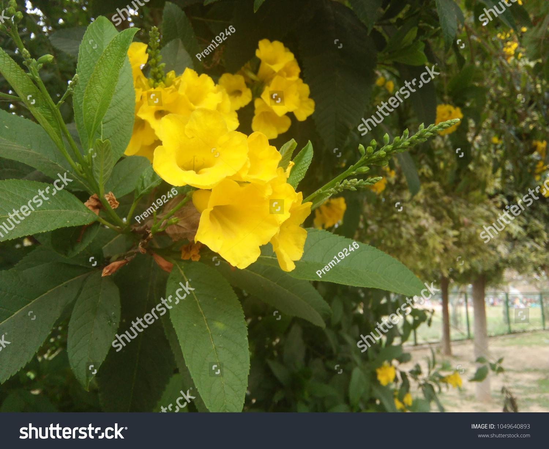 yellow flower mughal garden india stock photo (edit now) 1049640893