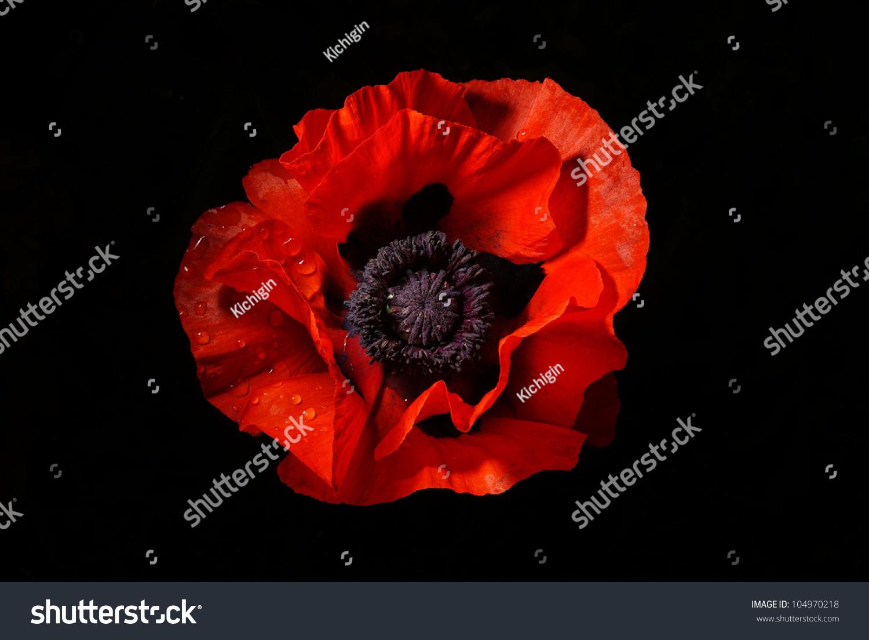 poppy red background - photo #40