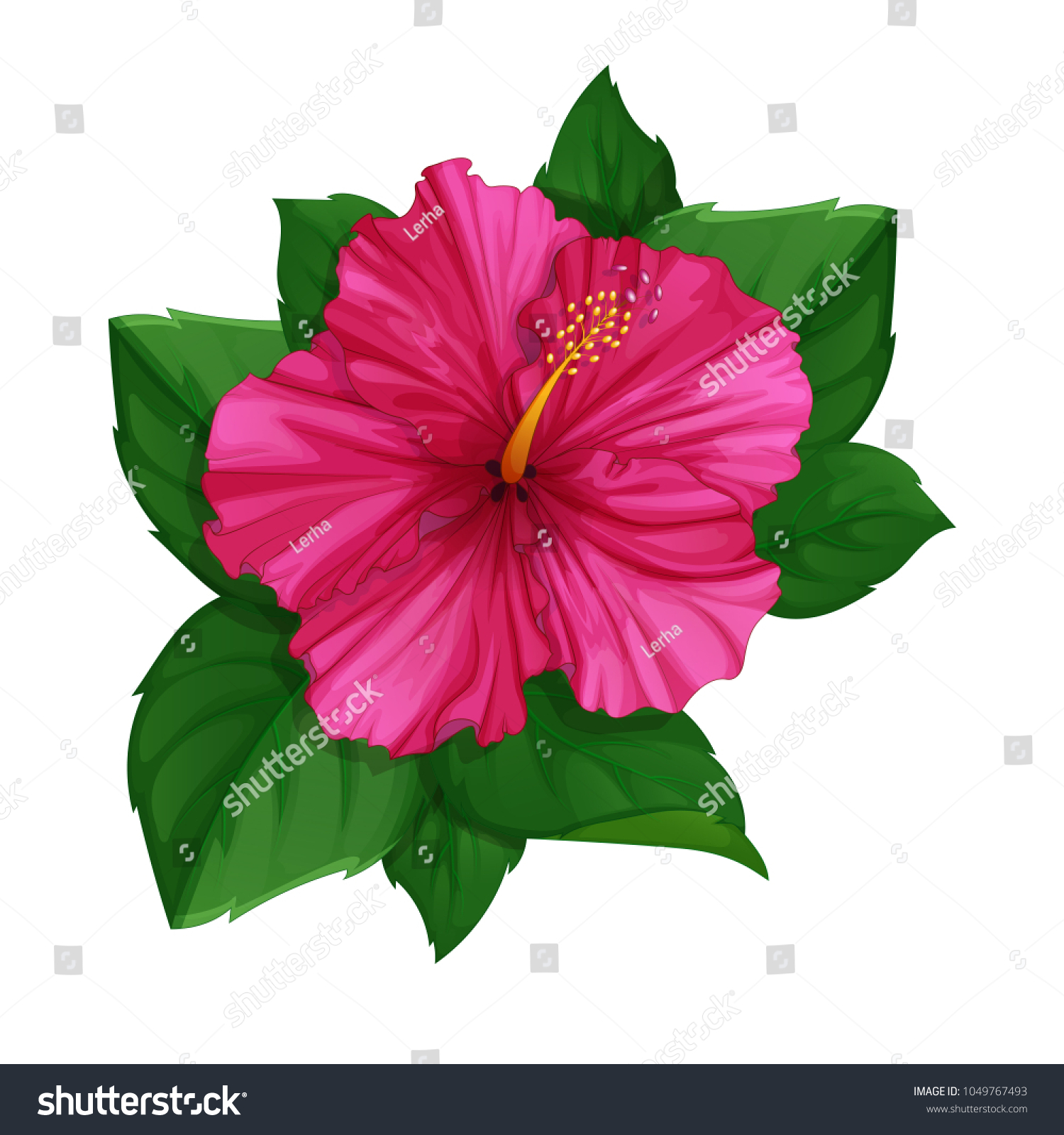 Flower pink hibiscus leaves tropical plants stock vector royalty flower of pink hibiscus with leaves tropical plants from the hawaiian islands vector illustration izmirmasajfo