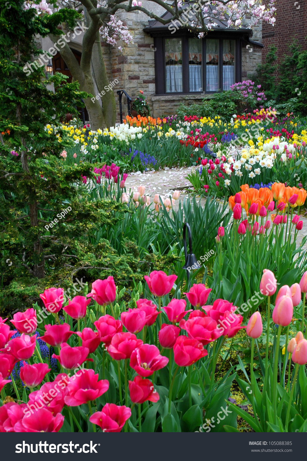 Image Result For How To Start A Perennial Garden